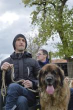't Veldzicht, therapie, honden, vriend, beperking
